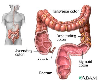 Colon Care Llc Of Portland The Northwest S Very Best For